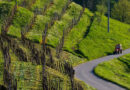 Stop all'uso del glifosate: svolta storica nell'area del Conegliano Valdobbiadene Prosecco DOCG