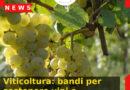 Viticoltura: bandi per sostenere vini e cantine del Veneto