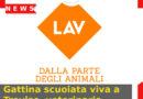 Gattina scuoiata viva a Treviso, veterinaria sporge denuncia.