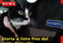 Storia a lieto fine del gatto Polpetta.