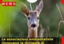 Le associazioni ambientaliste rinnovano la richiesta di ripristino del servizio di recupero degli animali selvatici